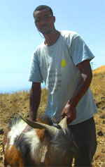 Through micro-finance this Cape Verdean man was able to purchase goats so that he can produce cheese that he can sell for a profit